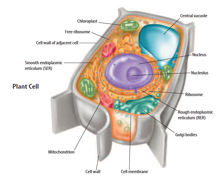 Plant Cell 6th Grade Science At Is 30 Mrtubbsfo
